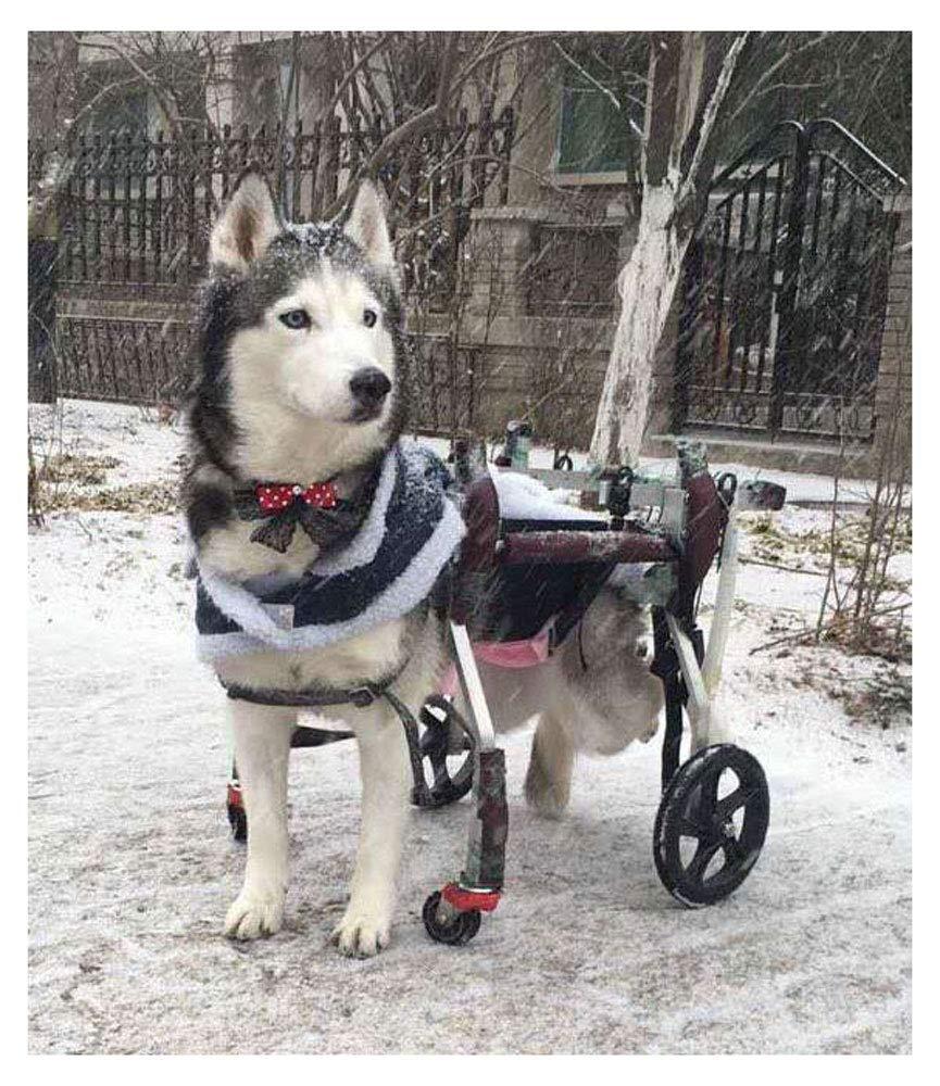 LLG-CWLY Silla de Ruedas para Mascotas Ajustable Scooter para Mascotas para Ayudar a Las Mascotas a Caminar Grandes Se Pueden Usar Mascotas pequeñas, ...