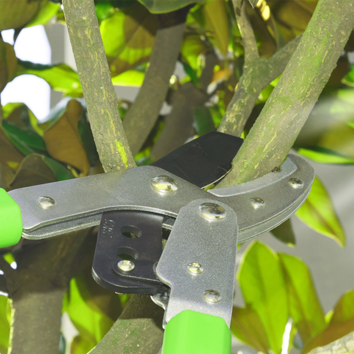 Telescoping Aluminium Light-weight Handle Garden Hedge /& Tree Lopper With Lever Drive System 28 ~ 40 inch Extendable Anvil Bypass Razor-Edge Pruning Lopper Up to 2 Inch Cutting Capacity