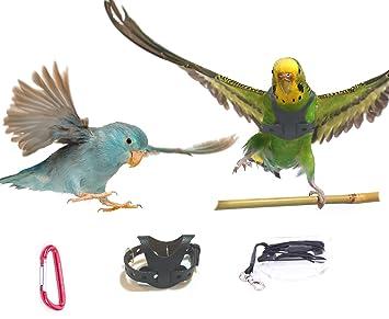 Amazon.com : Avianweb EZ RIDER Bird Harness with 8 Ft Leash ...