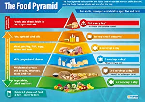 "Food Pyramid | Science Posters | Gloss Paper Measuring 33"" x 23.5"" 