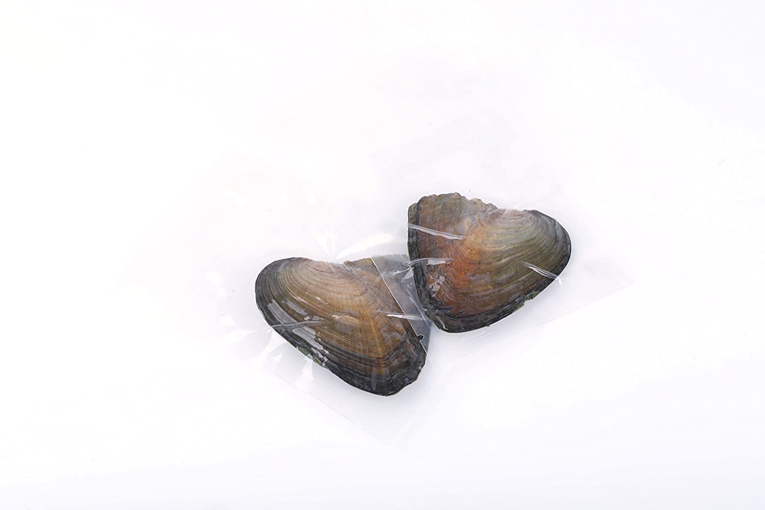 7-8mm SEASAN Quadruplet Oyster Pearls Freshwater Cultured Oysters with 4 Pearls Inside 10 PC