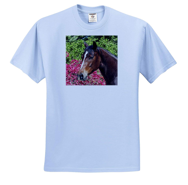 ts/_314726 Horses 3dRose Danita Delimont Horse Posing Adult T-Shirt XL