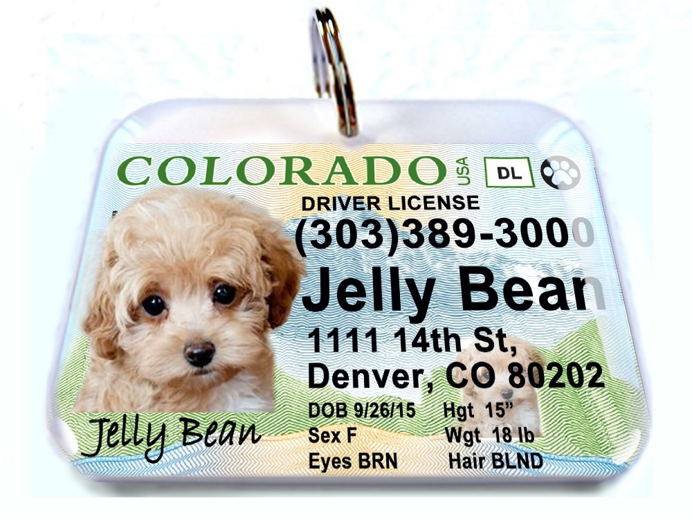 ID4Pet New Colorado State Drivers License Personalized for Dog's and Cats (Large 2.00'' x 1.50'') (Large 2.00'' x 1.50'')