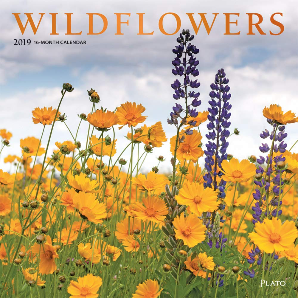 Amazon Wildflowers 2019 12 X 12 Inch Monthly Square Wall