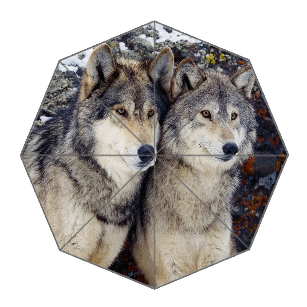 Dollay Me, Parapluie pliants  loup Taille unique