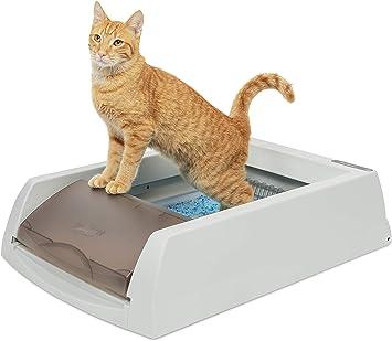 Amazon.com: PetSafe ScoopFree - Arena para gatos con bandeja ...