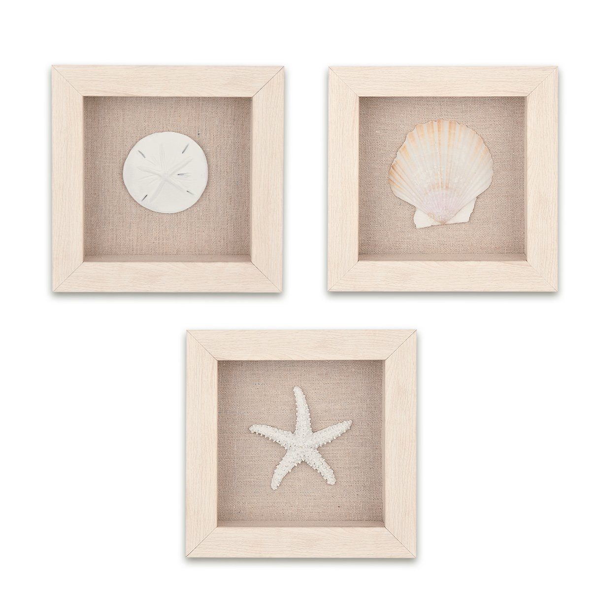 Home-Man Shadow Box Art Wall Decor, 3 Sealife Shadow Boxes Wall Art - Starfish, Seashell, Sand Dollar, Marine Organism Decorative Shadow Box Frame, Set of 3 by Home-Man