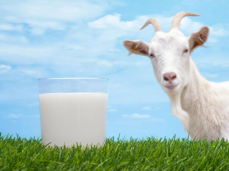 Pine Hollow Goat Milk Perfume Sticks 1オンスハワイアン夢 B078DTPFWM