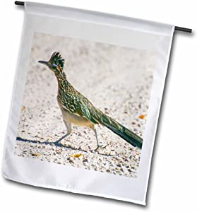 3dRose fl_92557_1 New Mexico, Bosque Del Apache, Roadrunner Bird-Us32 Bja0086-Jaynes Gallery Garden Flag, 12 by 18-Inch