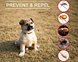 JoyTale Flea and Tick Repellent Cat Dog