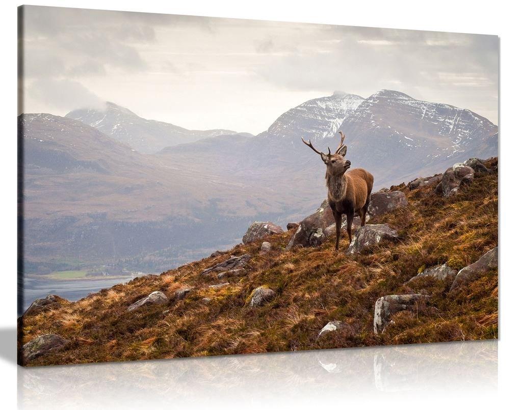 Scottish Highlands Landscape Scenery Art Print Black /& White Card or Canvas