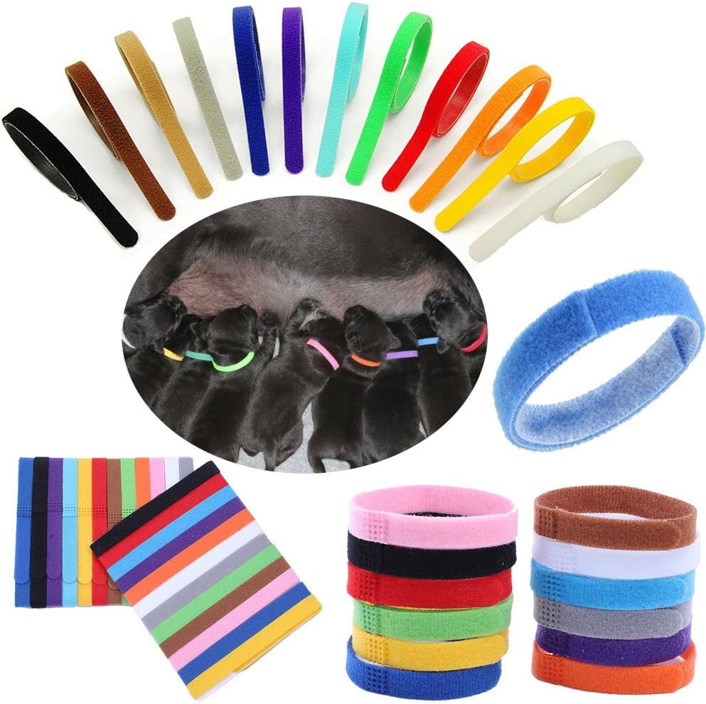 Chaton Multicolore CAOQAO 12 Couleurs Colliers ID DIdentification Comfortable Durable R/éGlable Ruban Auto-Adh/éSif pour Chat Petit Chien Chiot