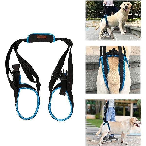ZAMAC - Cinturón de apoyo para levantamiento de mascotas para ...