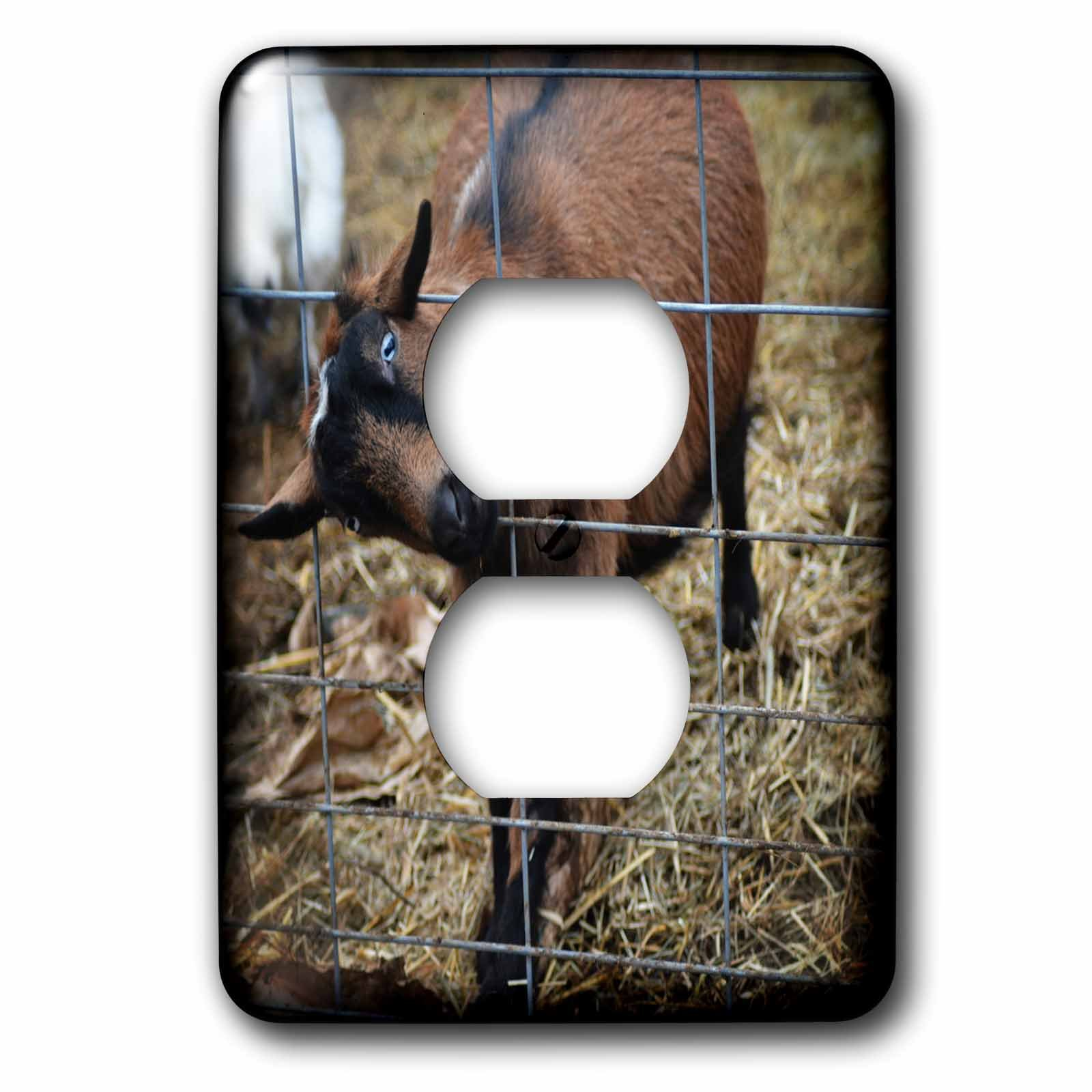 3dRose WhiteOaks Photography and Artwork - Goats - My Head is Stuck is a photo of a goat with its stuck sideways in fence - Light Switch Covers - 2 plug outlet cover (lsp_265338_6)