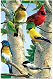 Favorite Songbirds Blank Boxed Note Cards With Envelopes, All Occasion (12 Count), Cute Card for Bird and Cardinal Lovers FS66507 Tree-Free Greetings