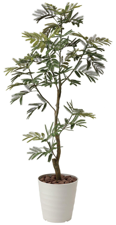 造花アート観葉植物 ネムノ木1.55< 誕生日祝い 結婚祝い 結婚記念日 出産祝いに > B01M9F6Y8R