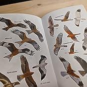 Aves de España (Descubrir la Naturaleza. Guías): Amazon.es: de Juana, Eduardo, Varela, Juan M.: Libros