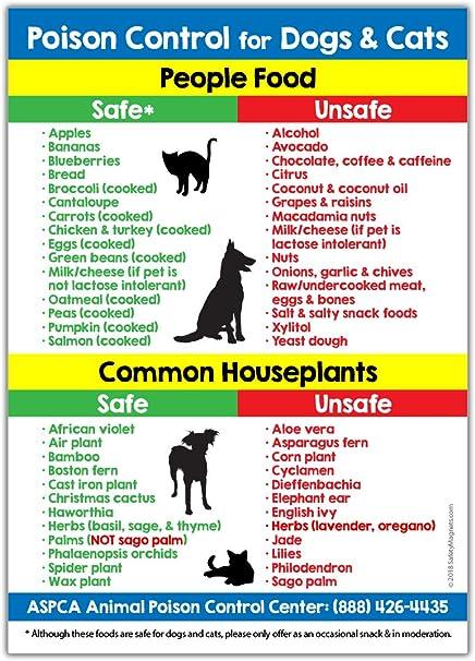 Amazon.com: Control de veneno para perros y gatos imán – 5.0 ...