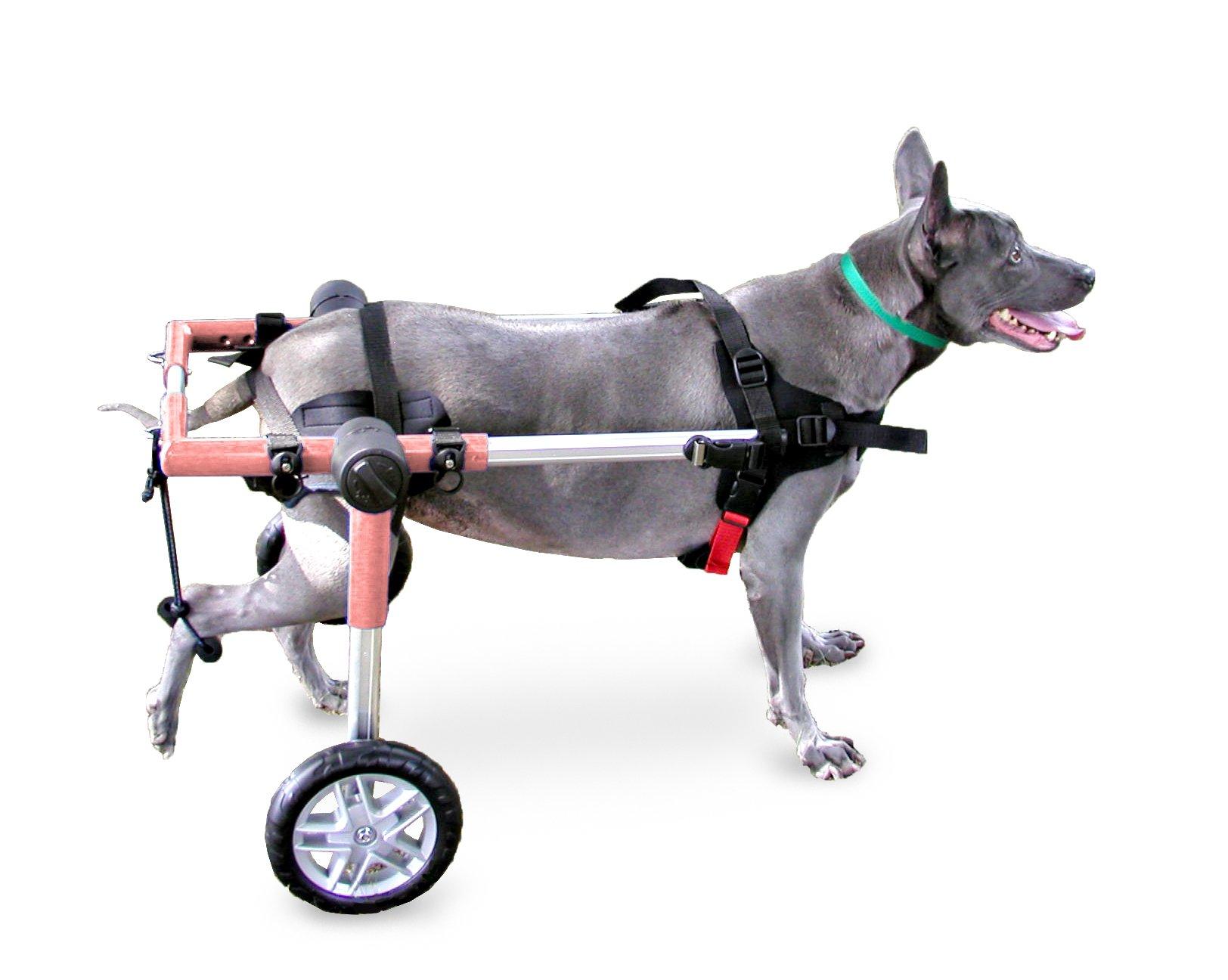 Dog Wheelchair - For Medium Dogs 26-69 lbs - By Walkin' Wheels