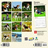 Beagles 2019 7 x 7 Inch Monthly Mini Wall