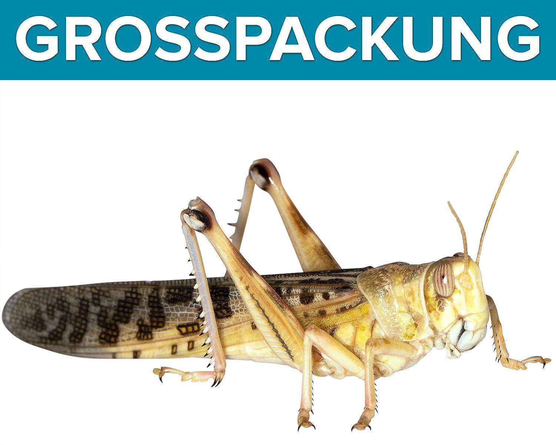 Heuschrecken 100 große adulte Wüstenheuschrecke Futterinsekten Reptilienfutter Feeders & more