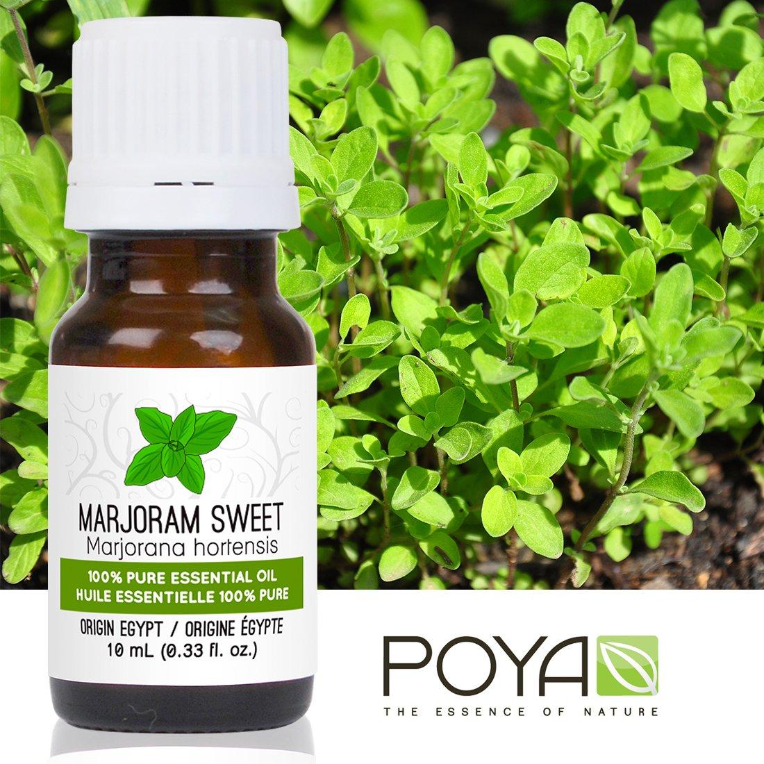 Marjoram Sweet Essential Oil 0 33 Image 3