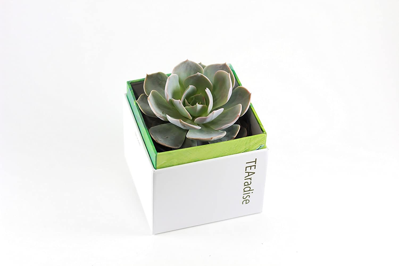 Amazon.com : TEAradise succulent gift box, succulents, succulent ...