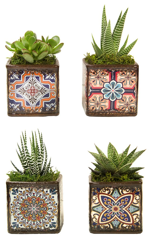 LiveTrends Design LTE 4-PK Rosettes Living Plant Decoration