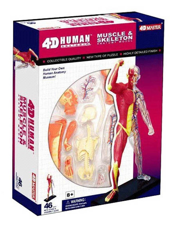 Amazon 4d Vision Human Anatomy Human Muscle And Skeleton