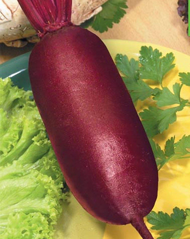種子レッドビートライバル有機栽培家宝野菜NON-GMO B015DTHM6C