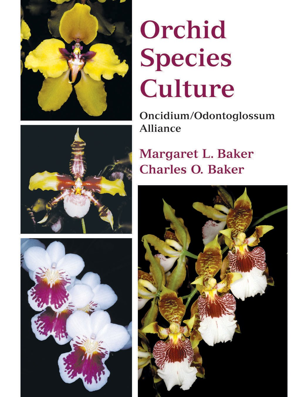 Orchid Species Culture: Oncidium/Odontoglossum Alliance: Charles O. Baker,  Margaret L. Baker: 9780881927757: Amazon.com: Books