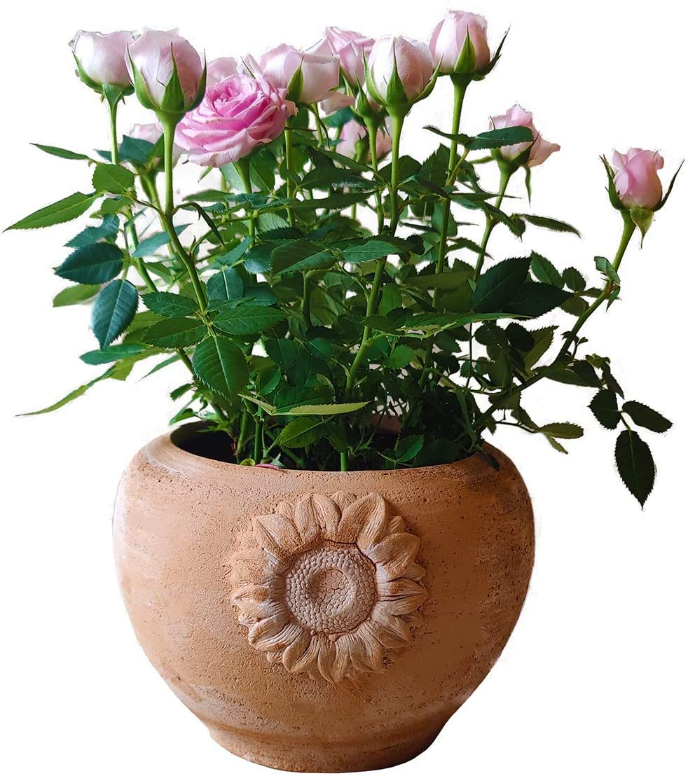 Macetero de terracota para flores, orquídeas, plantas suculentas y aromáticas, chiles, cactus y bonsáis, Diámetro 18 H15 cm, Hecho a mano, para exterior, interior y decorar tu jardín ☘️