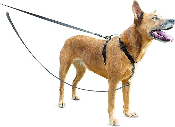 PetSafe - Correa para Perro Resistente y Duradera, Reflectante ...