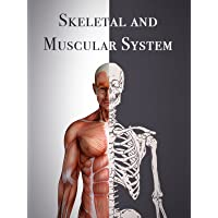 Skeletal And Muscular System