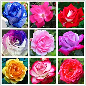 Rose Mix(100+)Seeds Flowers Easy to Grow Planting for Outdoor Indoor Home Bonsai