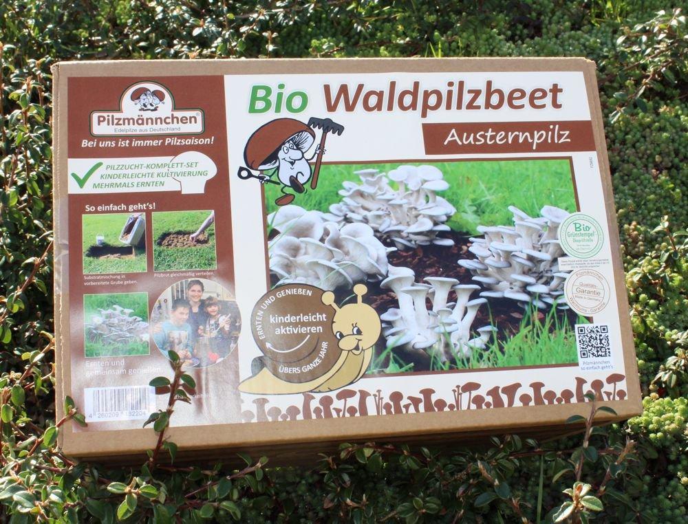 Austernpilz Bio-Waldpilzbeet