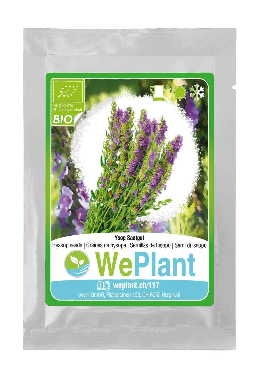 BIO Aneth /& Fenouil commun Graines de plantes aromatiques//Int/érieur /& Ext/érieur
