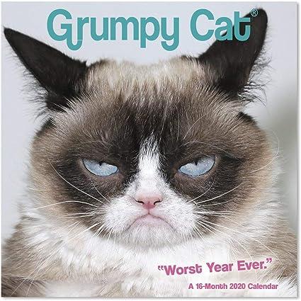 Calendario de pared de gato gruñón 2020, mini calendario (DDMN682820): Amazon.es: Oficina y papelería