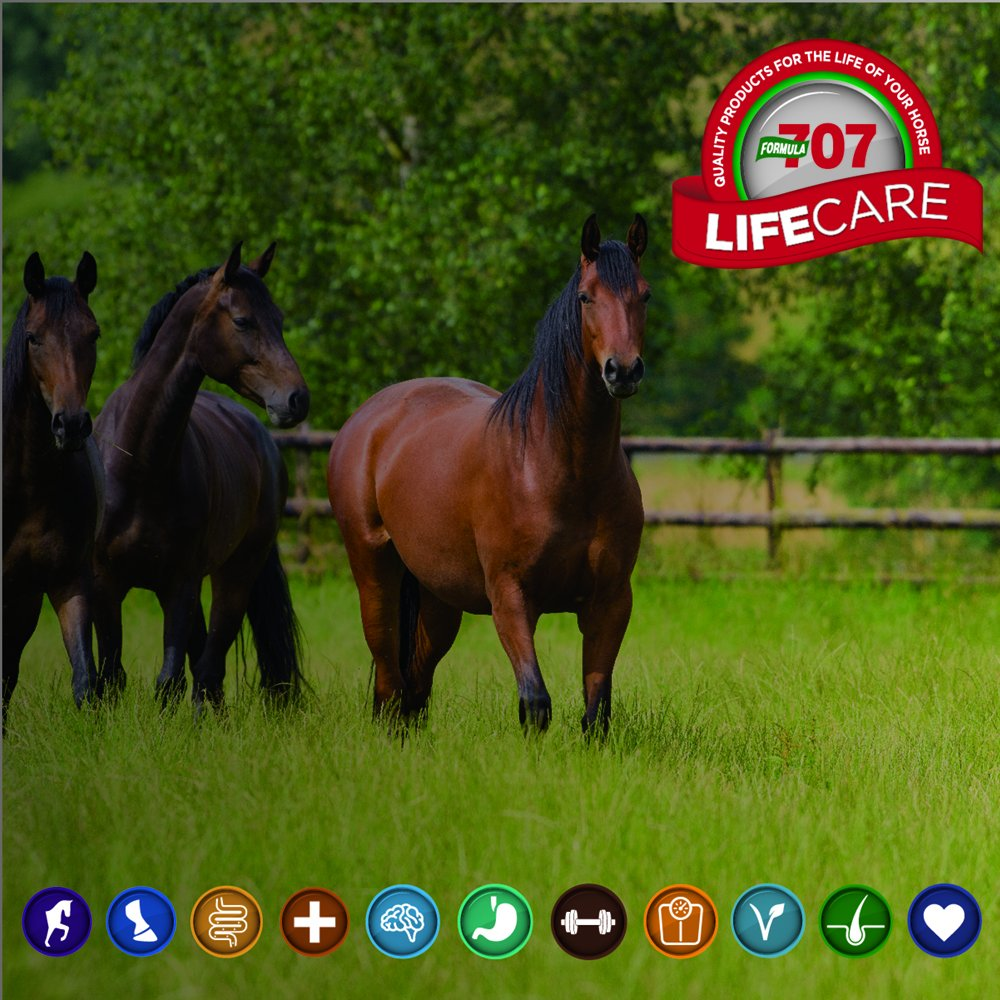 Formula 707 Joint 6in1 Equine Supplement, 5lb Bucket - MSM, Glucosamine, Chondroitin, Collagen, Bromelain & Green-Lipped Mussel for Horses by Formula 707 (Image #3)