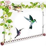 Bob's Best Hummingbird Feeder - 19.7'' Red Transparent Feeding, Tube Hummingbird Feeder, Easy to Use Hanging Hummingbird feed