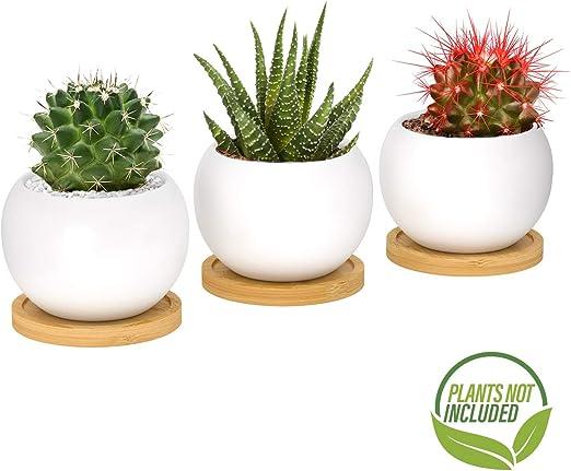 Maceta para plantas suculentas y cactus, pequeña maceta de ...