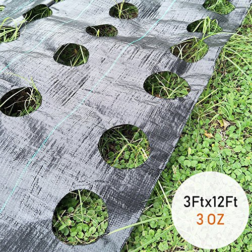 OriginA Weed Control Fabric Planting Holes - Ground Cover Weed Barrier - Eco-Friendly for Vegetable Garden Landscape, 3 feet by 12 feet