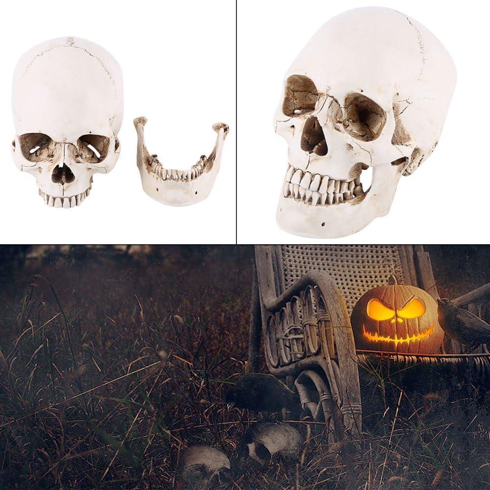 1pc del cranio del cranio della resina bianca a grandezza naturale del cranio per il modello di disegno Replica Drawing Ornament del partito