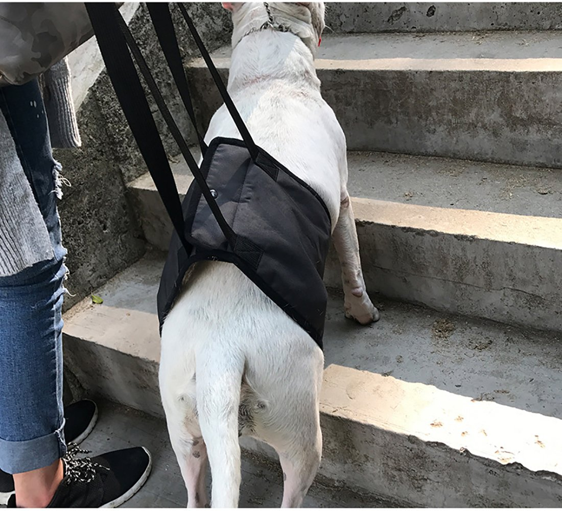 Dog Lift Support Harness Help Elderly Injured Disabled Arthritis ACL Pet Stand up//Walk//Climb Stairs//Crawl into Car Veterinarian Approved Rehabilitation Lifting Back Sling with Handle Black S
