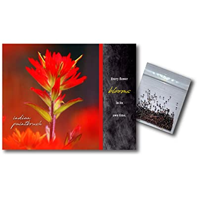 Inspirational Notecard with Indian Paintbrush Wildflower Seeds - Greeting Card : Garden & Outdoor
