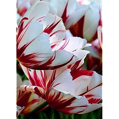 SILKSART 15 Tulip Bulbs Perennial Bulbs for Garden Planting Beauty Flower--SHIPPING NOW!!! : Garden & Outdoor