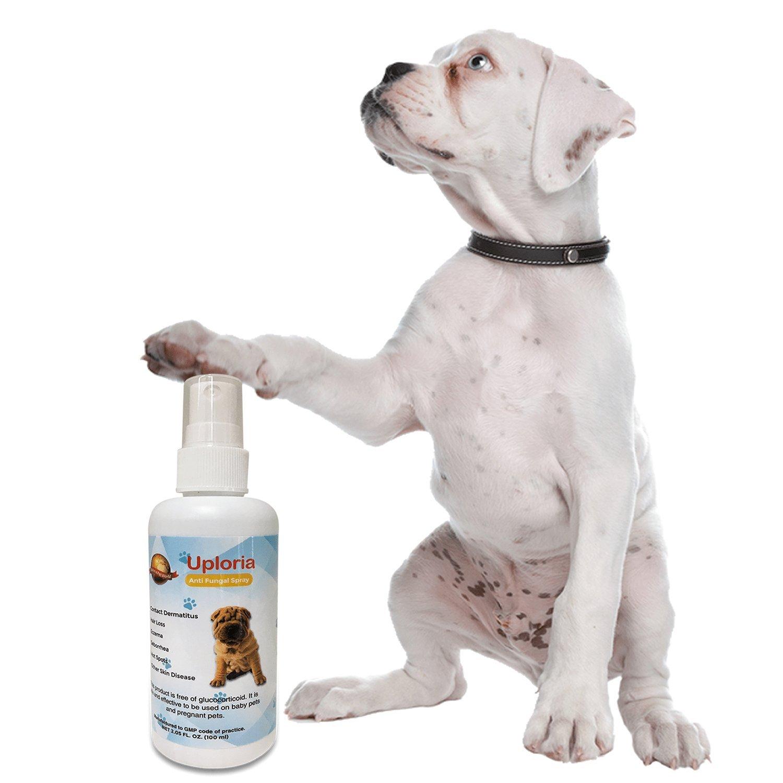 Spray Natural Para El Tratamiento De Las Alergias Cutáneas De Los Perros Que Alivia La Picazón Y Calma Las Afecciones Cutáneas Sensibles De Los Perros Con ...