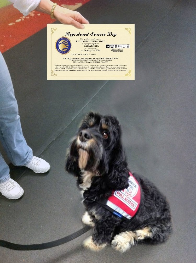 Registered Service Dog Certificate - Customized with your name, your dogs name and certification number and date. Free duplicate copy and registration into our national registry of Service Dogs by WORKINGSERVICEDOG.COM