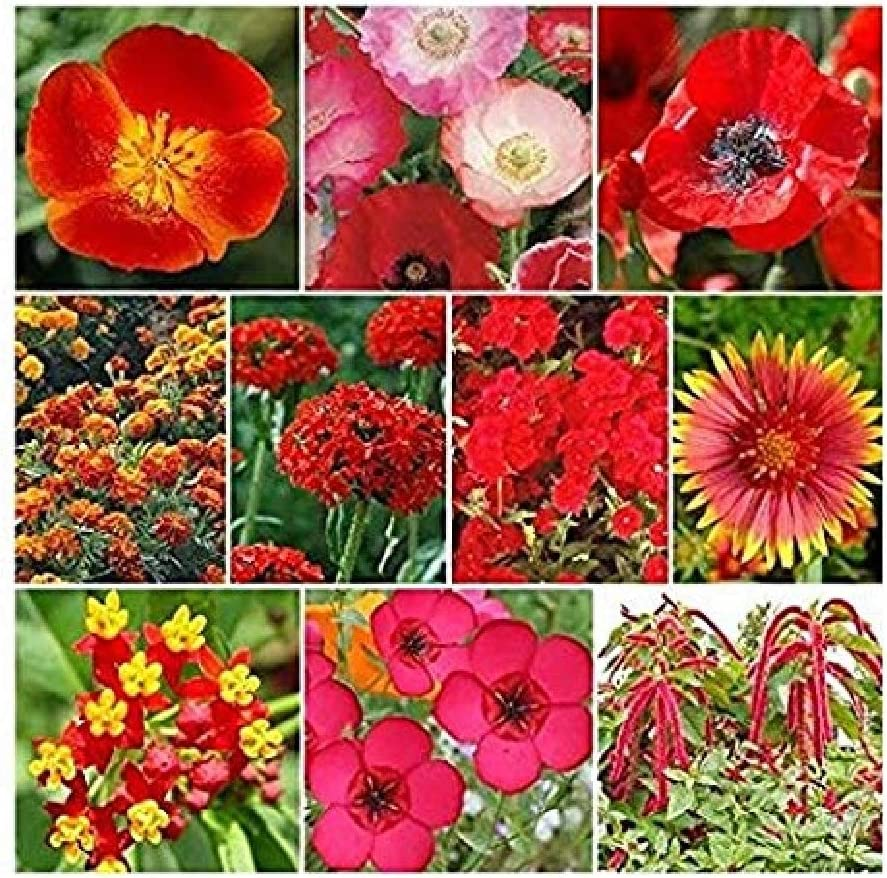 David's Garden Seeds Wildflower Red Head Mix 2544 (Multi) 200 Non-GMO, Open Pollinated Seeds
