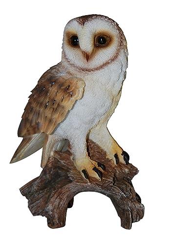 Vivid Arts Size-D Real Life Little Owl: Amazon.co.uk ...